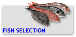 Fish Selection from Bayline Seafoods